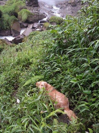 """""""Sara"""" en el sendero a la cascada"""