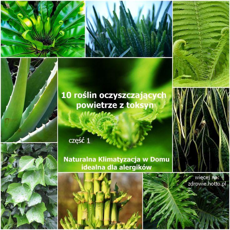 zdrowie.hotto.pl.pl-popularne-rośliny-domowe-oczyszczające powietrze-klimatyzacja-dla-alergików-cz.1