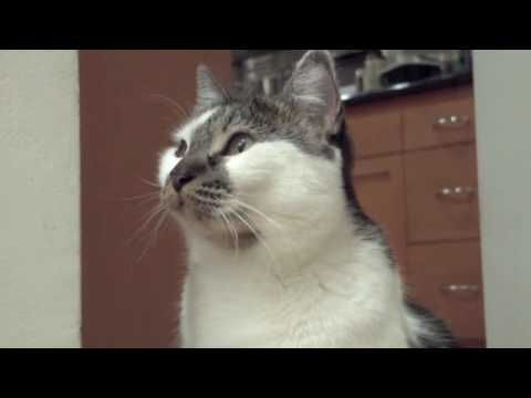 """This Cat Doesn't Know A Damn Thing This talking kitty doesn't know a damn thing, and it's not ashamed to admit it. Watch this feline answer all the questions presented to him by his pet parent, with """"I don't know"""""""