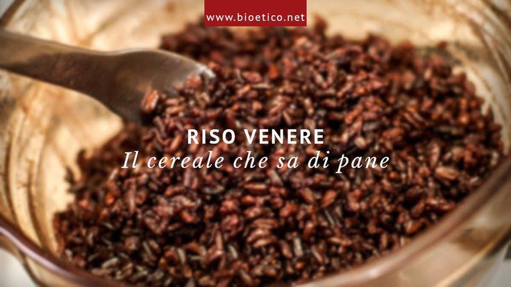 #Riso #Venere: il #cereale che profuma di #pane - #bioeticonet