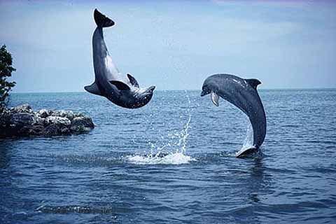 6 fatos assustadores sobre golfinhos ~ Curiosidades Terra - Blog de Curiosidades