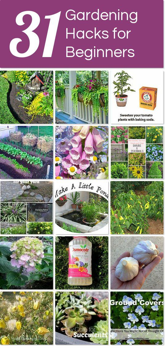 Gardening For Beginners Gardening Steps