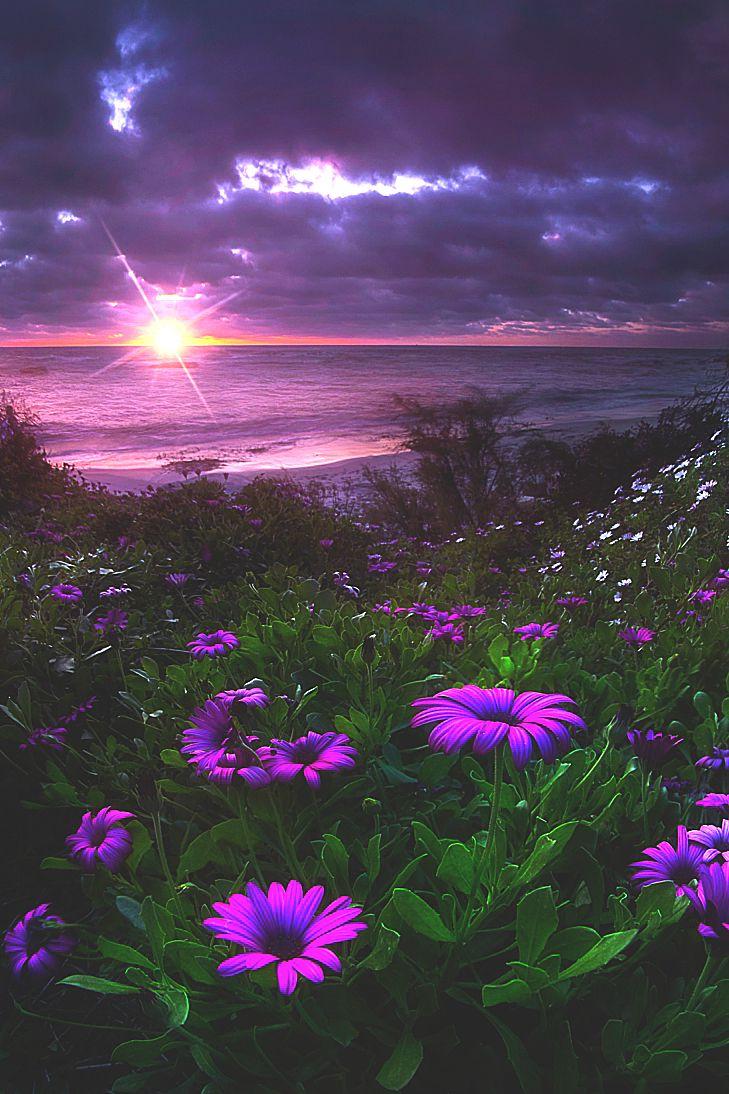 San Diego Springtime SunsetbyMatt Aden