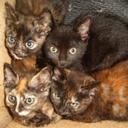 Aww, tortoiseshell kittens - are they not just the cutest - very different markings ...
