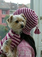 Easy knitted dog sweater with a matching hat. I guess if the human should get lost we know what to look for.