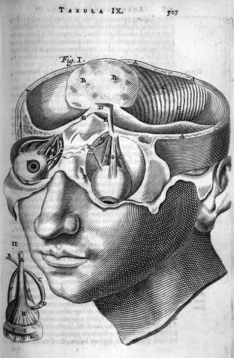 "biomedicalephemera: "" Cerebellum and ocular system in the human In vertebrates, the eyeballs are direct extensions of the brain; that is, they evolved after the brain, and are literally unimpeded access to the cerebellum and cerebrum. Because of..."