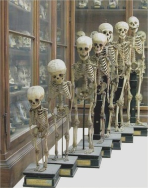 THE MUSEUMS OF THE UNIVERSITY OF PAVIA - PAVIA, ITALY
