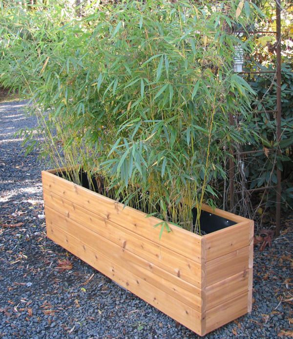 "Bamboo Planters 2x6 - bamboo will top at 12"" / the bigger the container the bigger the bamboo. lined also with a rhizome barrier"