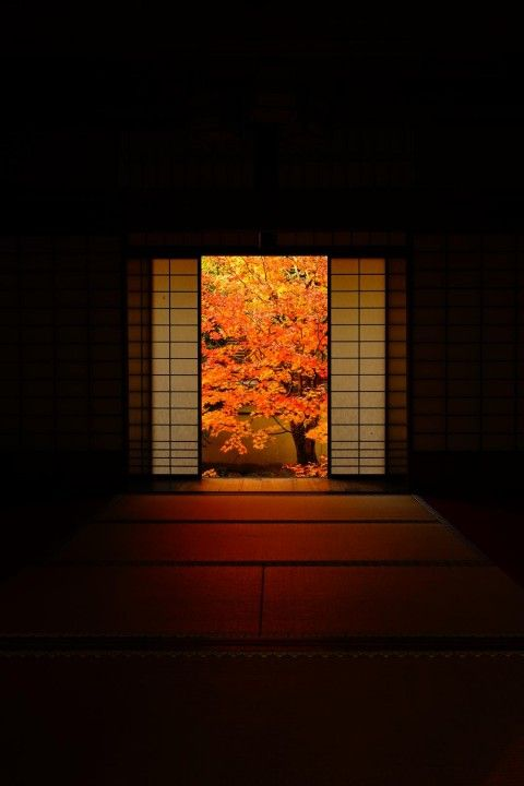 Unryu-in temple, Kyoto, Japan 瑠璃山 雲龍院, 京都 #Kyoto #AutumnLeaves