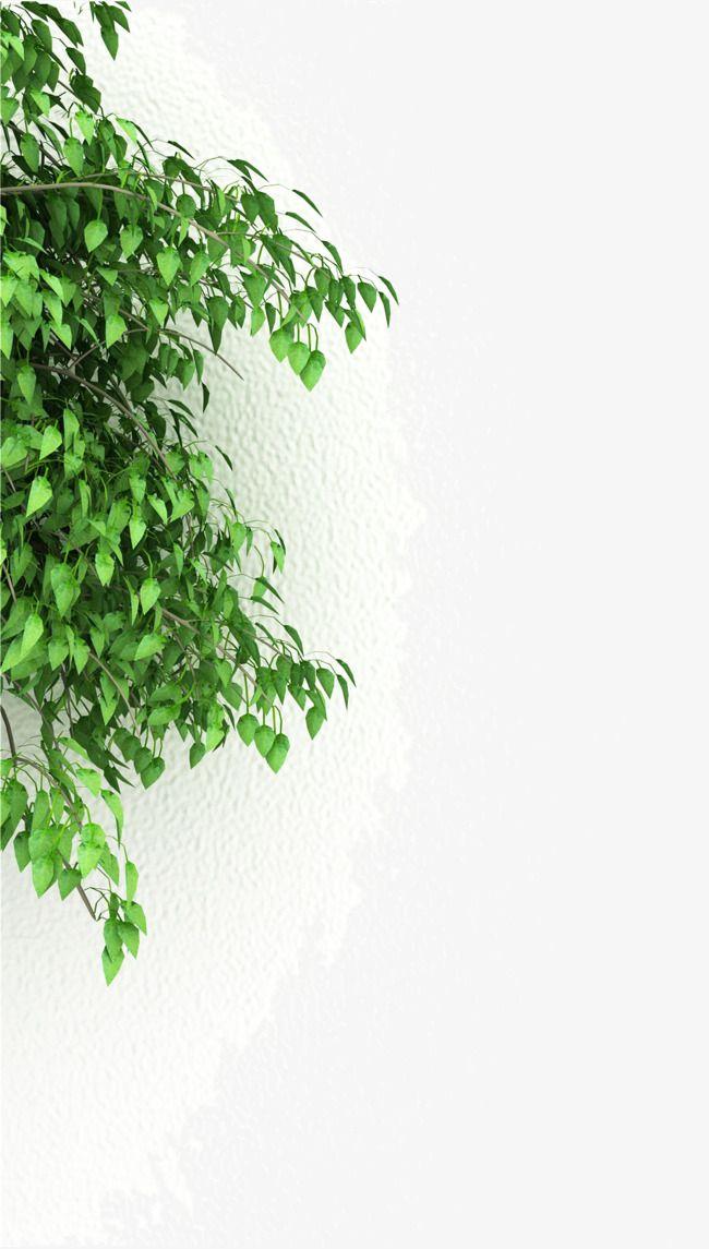 جدران بيضاء و العشب الاخضر Green Green Grass Grass