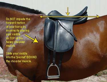 As horses lose or gain weight and change in terms of their fitness levels, their body and back shape can change as well, so it's important to revisit saddle fit every so often.  Here are some tips to evaluate whether a saddle correctly fits your horse.