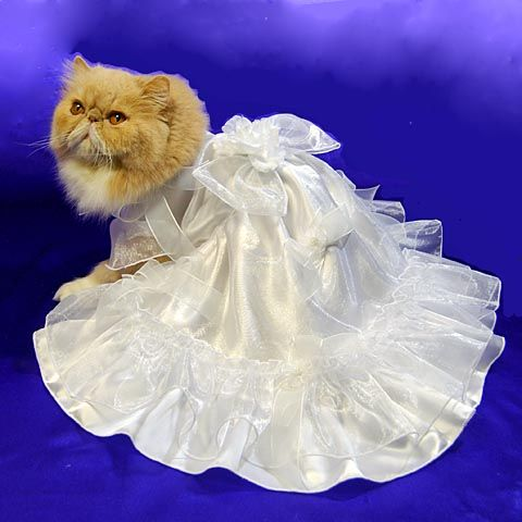 1000 images about cats in wedding dresses on pinterest