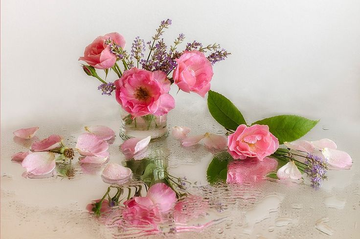 Pink Flowers Photography Still Life Vase Flower Desktop Wallpaper Hd