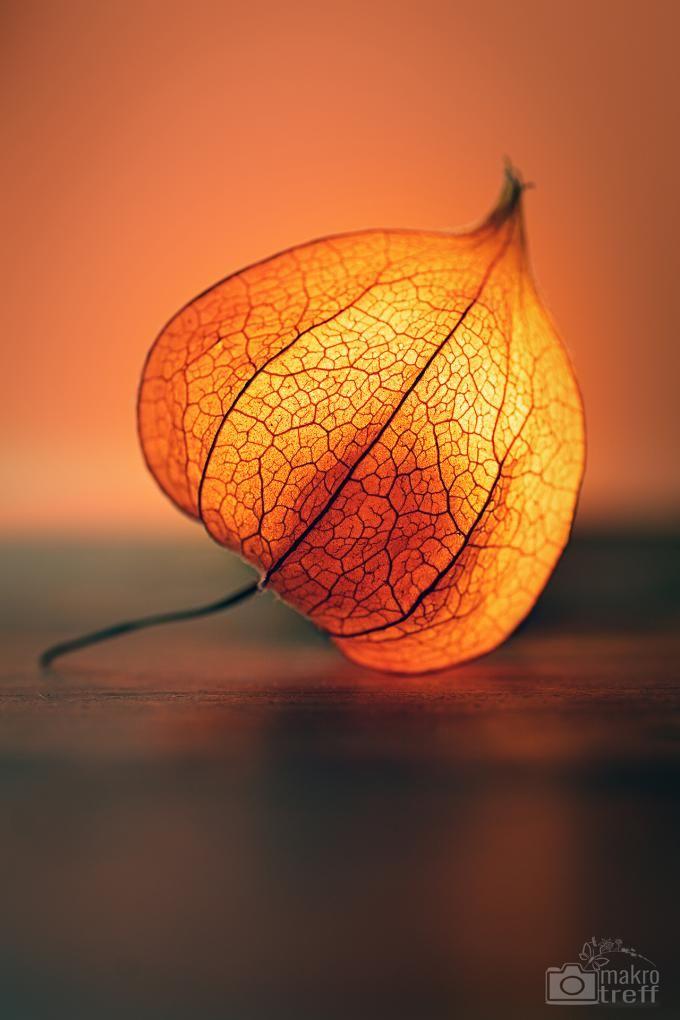 Foto-Howto: Physalis zum leuchten bringen. In diesem Tutorial erfahrt ihr, wie man die Lampionblume am besten zur Geltung bringen kann. #physalis #lampionblume #lampion