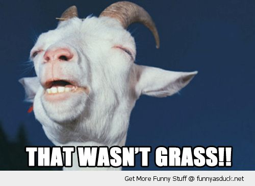 goat memes | that wasn't grass high stoned wasted goat ...