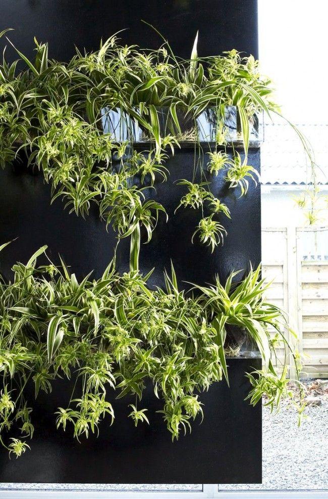 HappyModern.RU   Хлорофитум (55 фото): полезное и пестрое комнатное растение   http://happymodern.ru