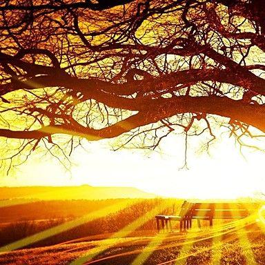 doek set van 3 landschap grote boom bij zonsondergang stretched canvas afdrukken klaar te hangen - EUR € 49.67