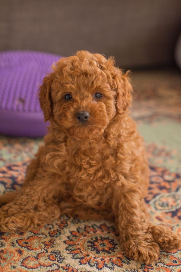 Puppies Can Be So Funny And The Cutest Animals Ive