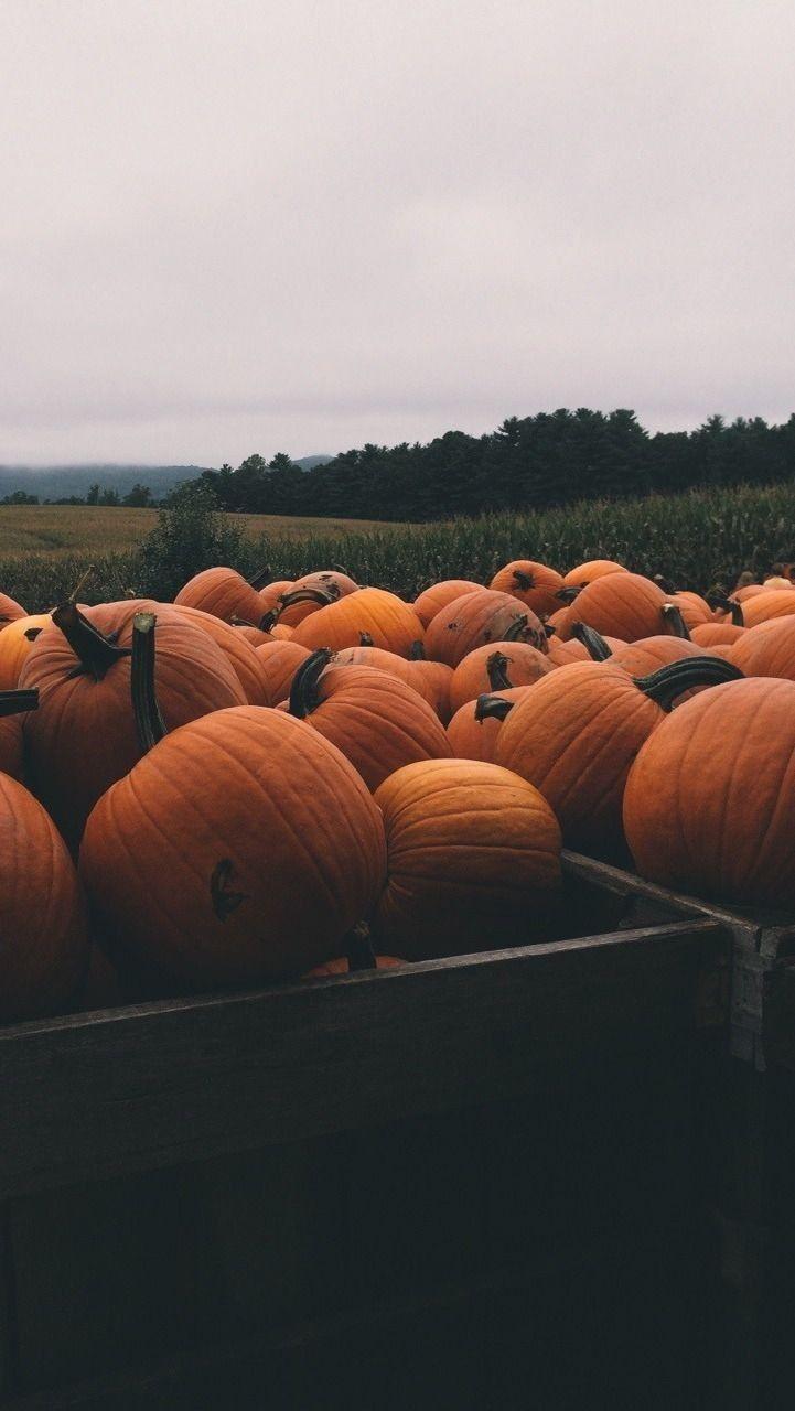 Обои на хэллоуин | Осенние тыквы, Осенние виды, Осенние ...