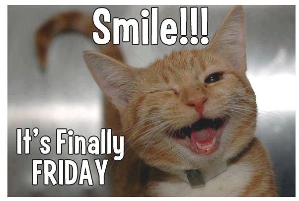 Smile its Friday quotes quote cat friday kitten days of the week friday quotes