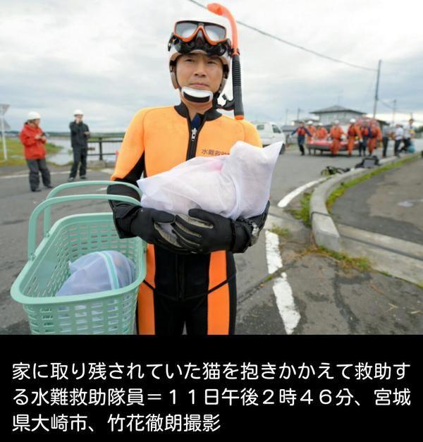 災害時、水難救助隊員が猫に洗濯ネットをかけて救助→それにはちゃんとした理由があった! - Togetterまとめ