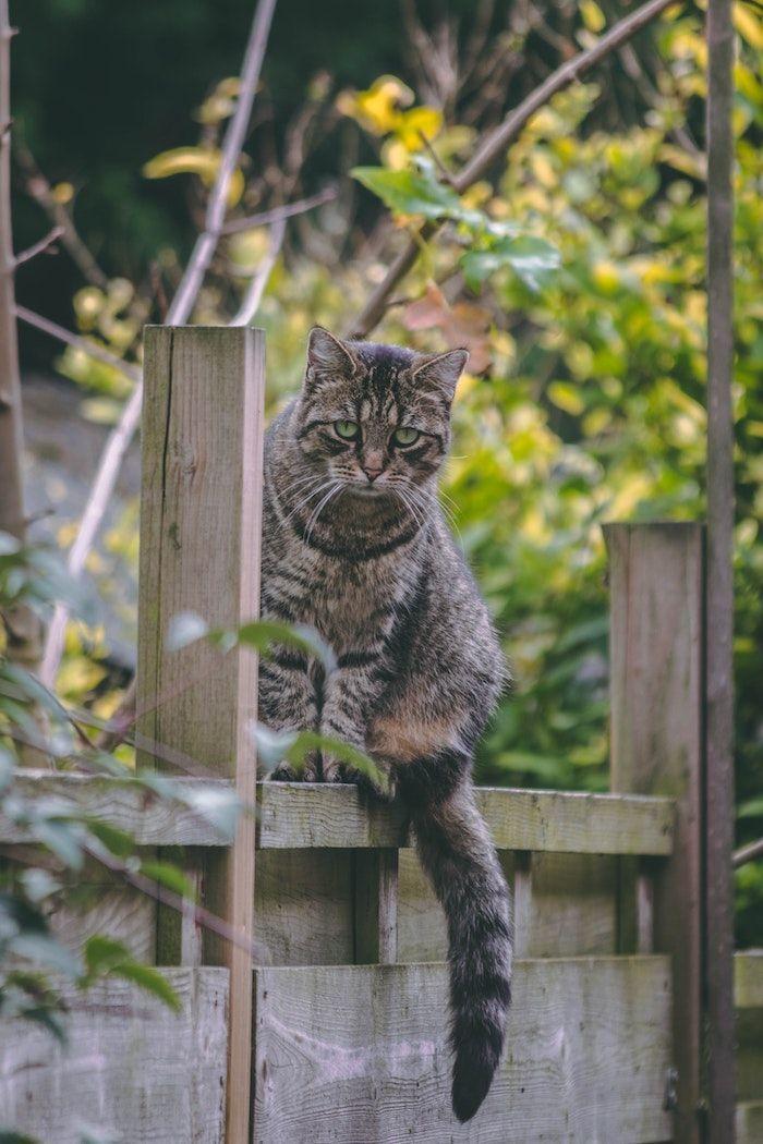 1001 Ideen Und Hilfreiche Tipps Wie Sie Die Katzen Vertreiben Katzen Vertreiben Graue Katzen