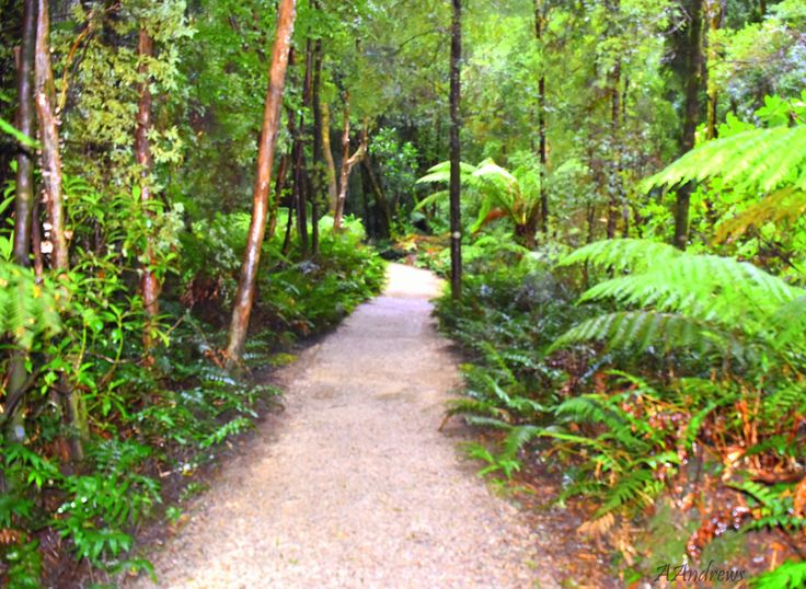 A walk into the rain forest
