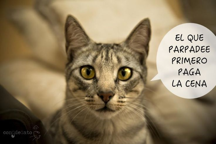 parpadeo-de-gato