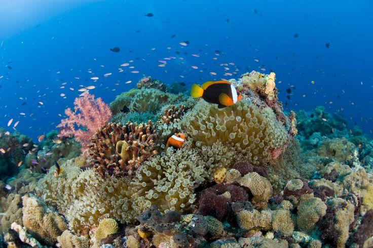 beautiful coral reef | underwater beauty | Pinterest