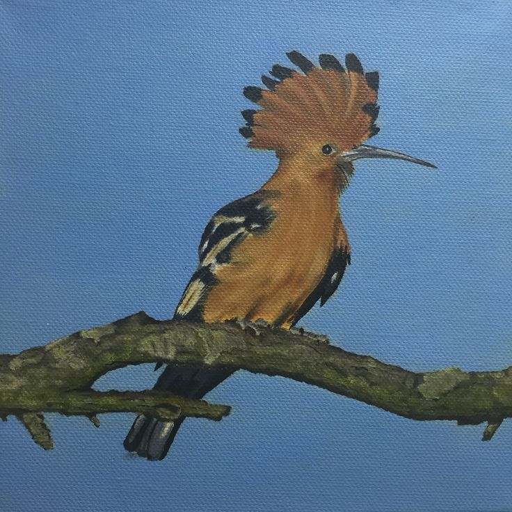 African Hoopoe, oil on canvas