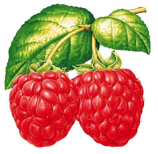 .raspberries