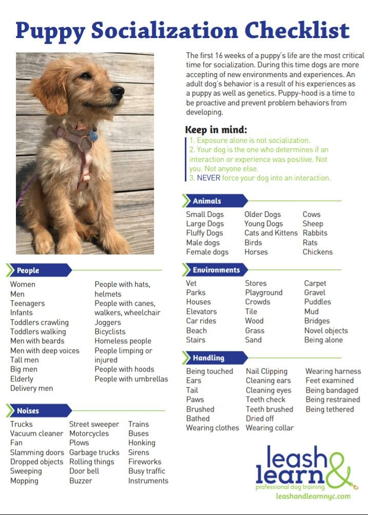 Puppy Socialization Checklist From Leash Learn Professional