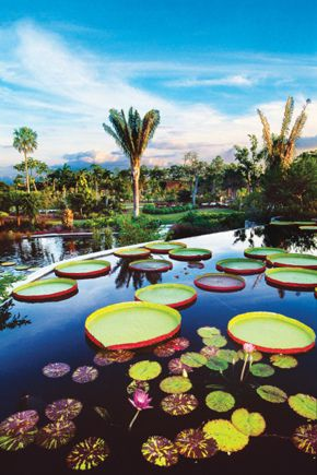 Naples Botanical Garden- dinner plate lily pads- Awesome!
