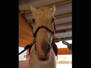 This horse is brutally honest about his feelings towards dressage – VIDEO Break