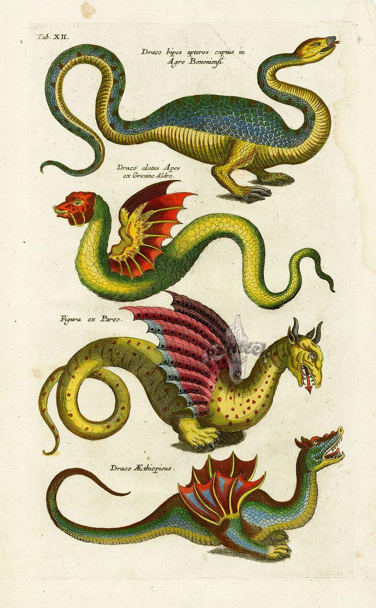 14 best nature taxonomy images on pinterest animals botanical