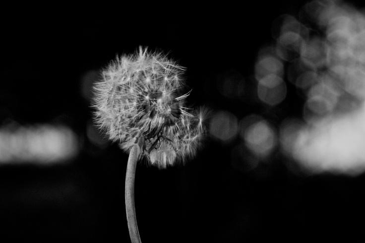 Wishes...: Art Photography, Picture Worth, Photography Art, Nature Photography, Photo Idea, Worth 1000, Neat Pictures