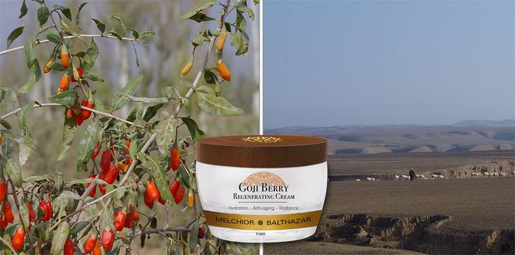 A true labor of love. Coming soon: Melchior & Balthazar's newest treasure- GOJI BERRY REGENERATING CREAM. The best of nature,  bringing out the best in you.
