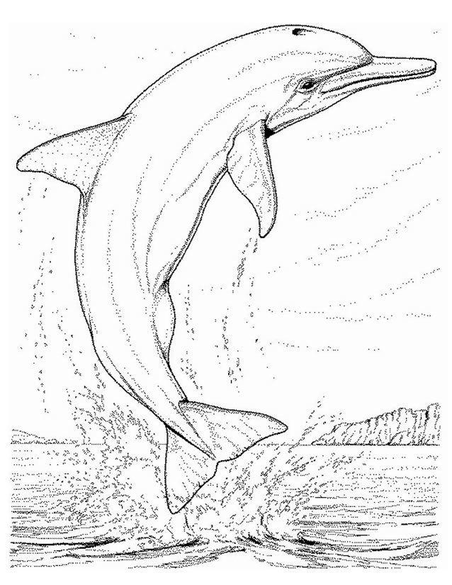 Coloriage dauphin à imprimer gratuitement