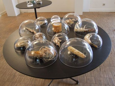 9 best bell jars and reliquaries by andy paiko images on pinterest bell jars glass art and - Cabinet de curiosite contemporain ...