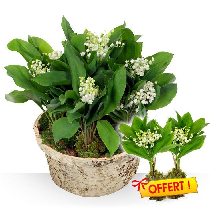 17 best images about fleurs et cadeaux on pinterest for Fleurs et cadeaux