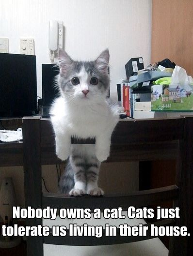 Nobody owns a cat. Cats just tolerate us living in their house.