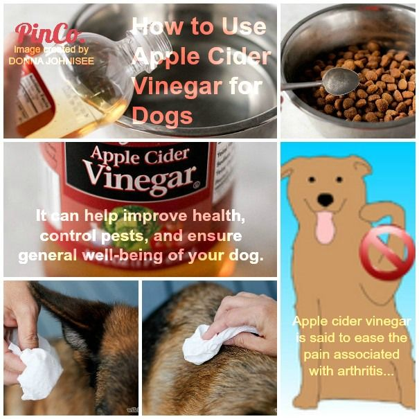 Is Apple Cider Vinegar A Good Disinfectant For Dogs