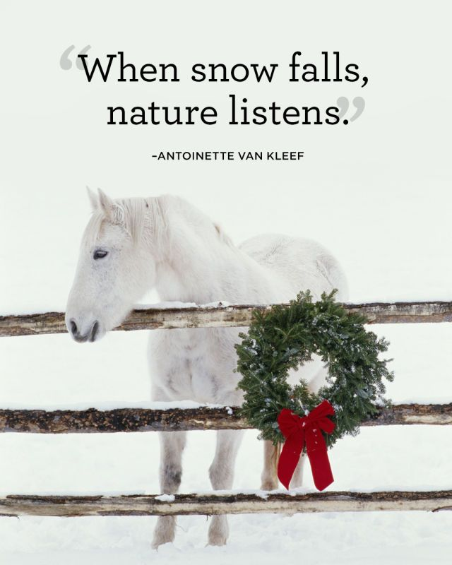 18 Absolutely Beautiful Quotes About Snow