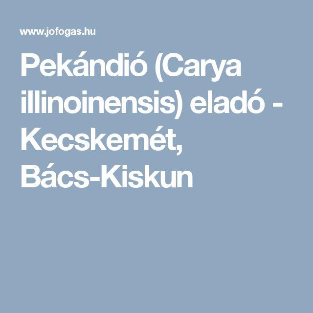 Pekándió (Carya illinoinensis) eladó - Kecskemét, Bács-Kiskun