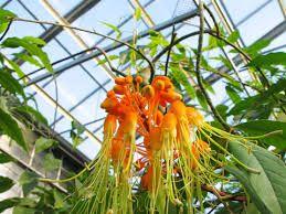 Afbeeldingsresultaat voor botanische tuinen utrecht