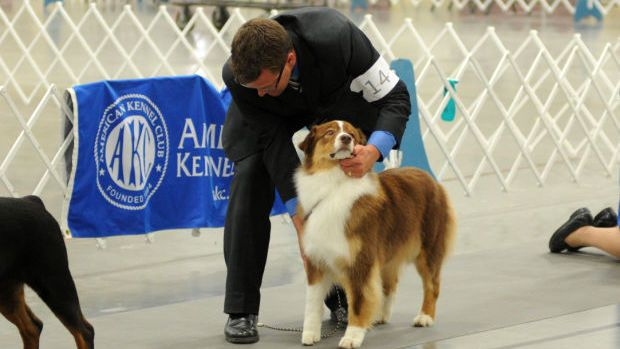 Crab Orchard Kennel Club to host AKC Dog Shows | Local News ...