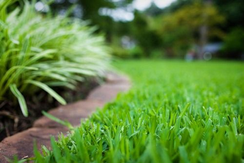 Tips for lawn lovers: Everyone wants to know how to get a green lawn, right? There are many lawn maintenance practices that will help give you a healthy, lush and, yes, green lawn, but let's start with its most obvious needs.