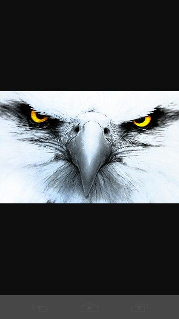 Eagle eyes for my next tattoo                                                                                                                                                      More