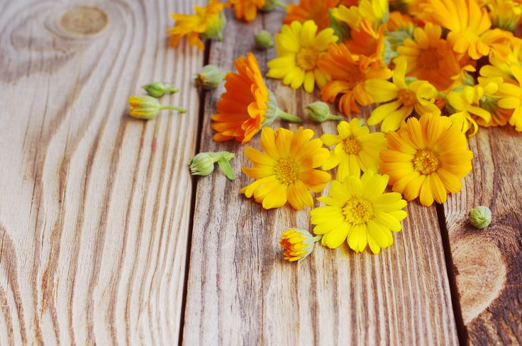 Calendula (Calendula officinalis) - It is rich in Vitamin E and C which promotes skin healing and supports collagen growth needed to maintain tight, supple skin. Calendula is an antiseptic, healing, soothing, anti-inflammatory plant used to treat itching, flaking, weeping skin conditions, burns, rashes, inflammation and sensitive skin. For these reasons I use Calendula in the Nourishe Face Cream, Healing Cream, Pregnancy Oil & Face Scrub.