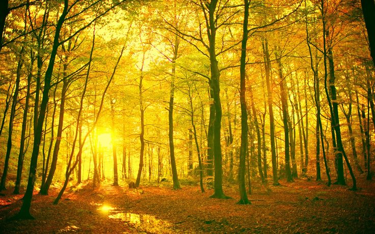 mystical forest - Google Search